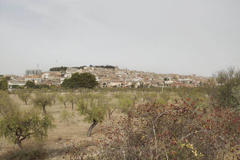 Camp d'Arbeca d'oli d'oliva